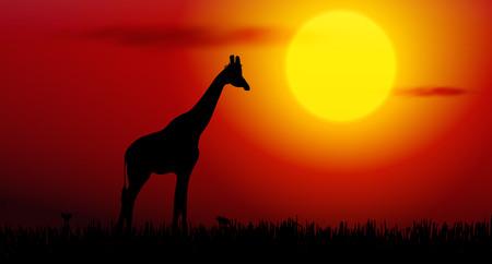 giraffe silhouette: Vector illustration of giraffe silhouette on sunset Illustration