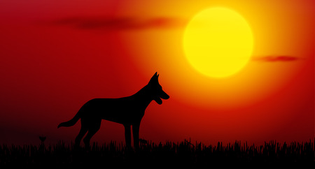 dingo: Vector illustration of dog silhouette on sunset