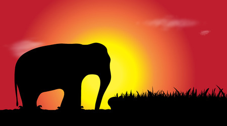 Vector silhouette of elephant in water at sunset. Illustration