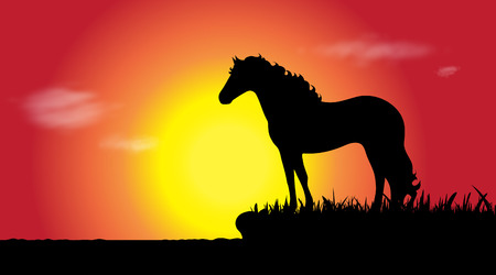 Vector silhouette of horse in nature at sunset.