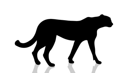 Vector silhouette of cheetah on white background.