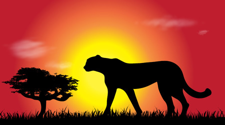 Vector silhouette of cheetah at savana.