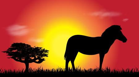 Vector silhouette of zebra at savana.