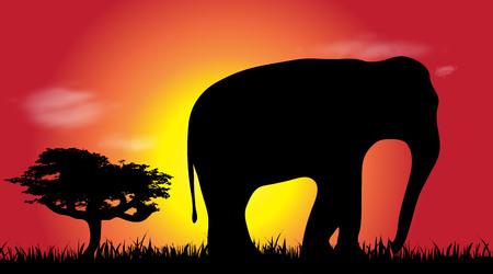 Vector silhouette of elephant at savana. Ilustrace