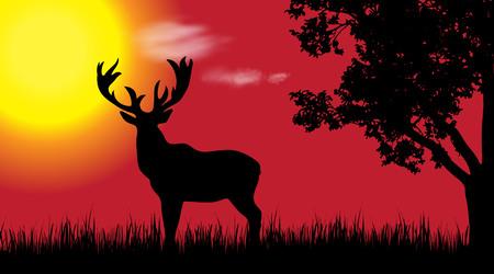 Vectorsilhouet van herten in aard bij zonsondergang.