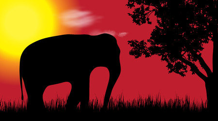 Vector silhouette of elephant in nature at sunset.