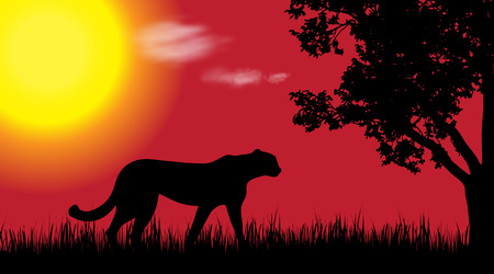 Vector silhouette of cheetah in nature at sunset.