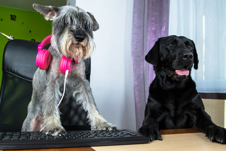Couple of dogs sitting at computer and looking on the screen.