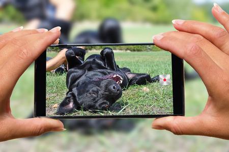 Woman with mobile phone photos dog. Reklamní fotografie - 101009177