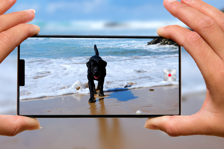 Woman with mobile phone photos dog on the beach. Stock Photo