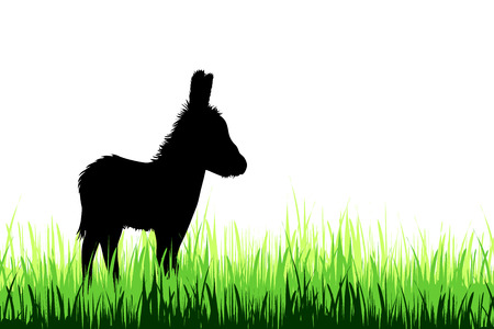Vector silhouette of donkey on a meadow on white background.