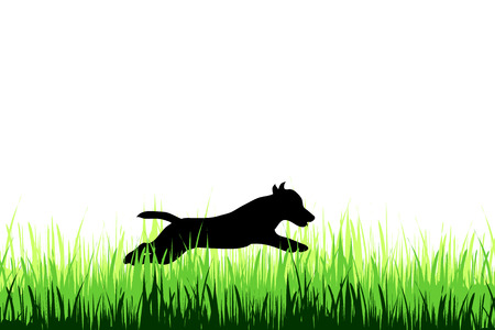 Vector silhouette of dog on a meadow on white background. Illustration