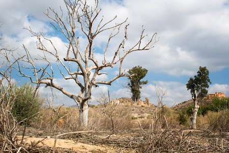 An arid landscape with a dry tree.