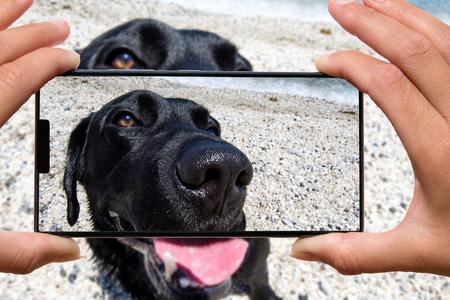 Woman with mobile phone photos dog on the beach. Фото со стока