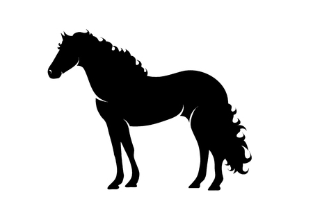 Vector silhouette of horse on white background.