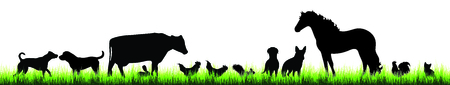 Vector silhouette of farm animal in the grass on white background.