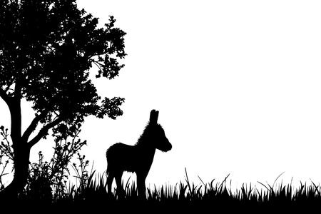 Vector silhouette of donkey on the meadow. 向量圖像
