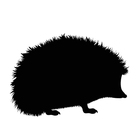 Vector silhouette of hedgehog on white background. Illustration