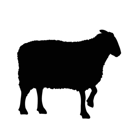 Vector silhouette of sheep on white background.