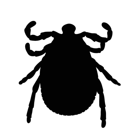 Vector silhouette of harvest-mite on white background. Illustration
