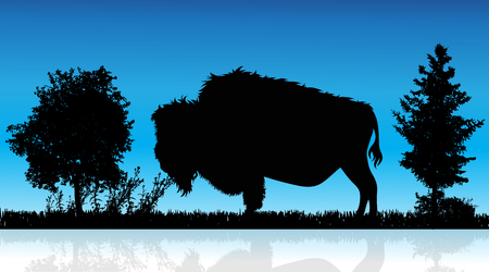 Vector illustration of buffalo in nature on white background. Wild animal. Illustration