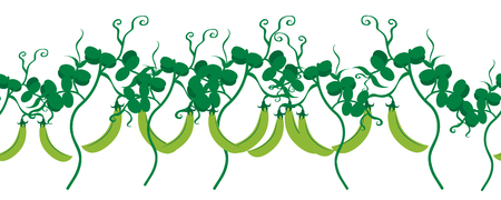 Vector illustration of painted peas on white background. Symbol of vegetable, food,vegetarian,vegan. Illustration