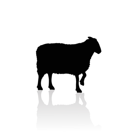 Vector silhouette of sheep on white background.Symbol of animal and nature. Çizim