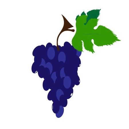 Vector illustration of painted grape on white background. Symbol of fruit, food,vegetarian,vegan.