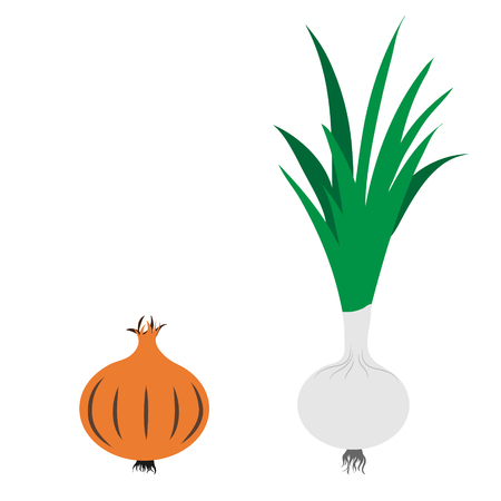 Vector illustration of painted onion and spring onion on white background. Symbol of vegetable, food,vegetarian,vegan. Illustration