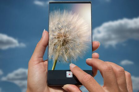 Woman photographing on cell phone dandelion in the blue sky with sun. Stockfoto