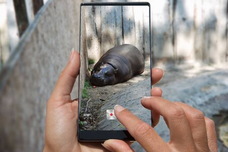 Woman photographing on cell phone Hippo at the zoo, lies on the ground.