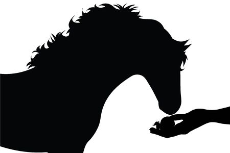 Vector silhouette of person who give food his horse on white background. Symbol of animal, pet, eat, care, save, vet, farm, veterinary.