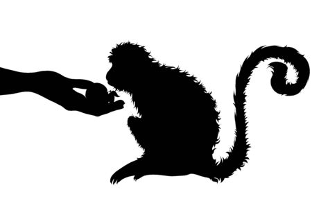 Vector silhouette of person who give food monkey on white background. Symbol of animal, wild, eat, care, save, africa. Ilustração