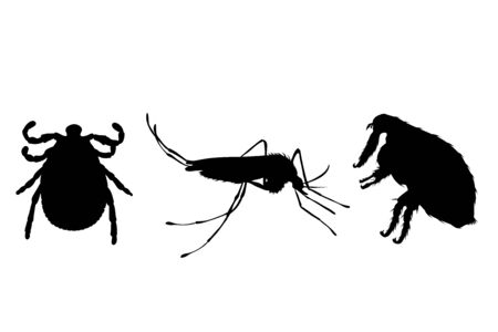 Vector silhouette of flea, thic and mosquito on a white background. Symbol of parasites like set together.