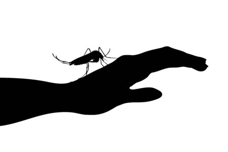 Vector silhouette of mosquito sitting on human hand on white background. Symbol of insect who annoying people. Danger of malaria and dengue disease.