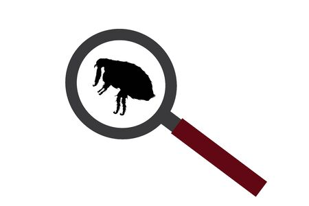 Vector silhouette of flea under magnifying glass on white background. Symbol of insect who annoying animal.