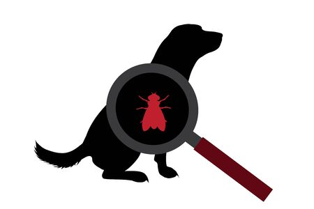Vector silhouette of fly under magnifying glass sitting on dog on white background. Symbol of insect who annoying animal.
