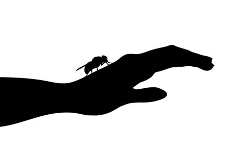 Vector silhouette of fly sitting on human hand on white background. Symbol of insect who annoying people. Danger of tsetse disease. Ilustrace