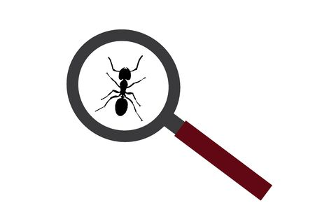 Vector silhouette of ant under magnifying glass on white background. Symbol of insect who annoying people.