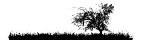 Vector silhouette of meadow with tree on white background. Symbol of nature with grass.