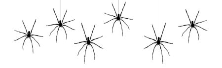 Vector silhouette of spider on white background. Symbol of annoy insect.