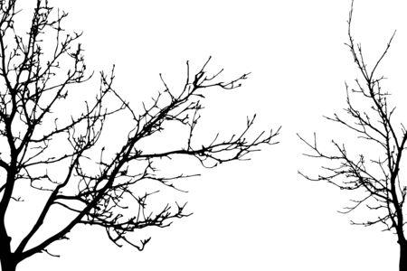 Sylwetka wektor drzew na białym tle. Symbol lasu.