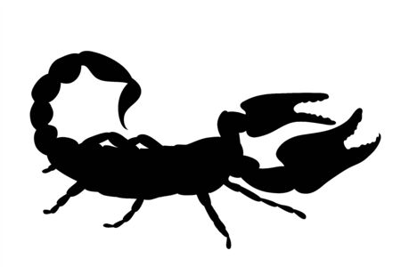 Vector silhouette of scorpion on white background. Symbol of animal.