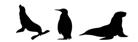 Vector silhouette of set of sea lions and penguin on white background. Symbol of Arctic animals.