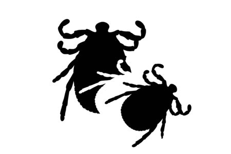 Vector silhouette of tick. Symbol of insect.