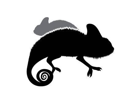 Vector silhouette of couple of chameleon on white background. Symbol of animal.