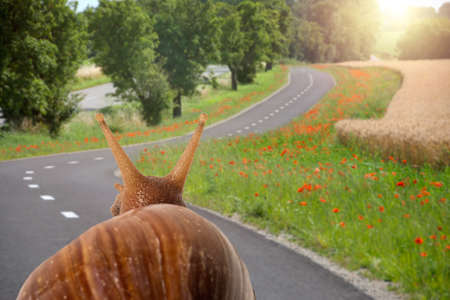 Soft focus of snail travels on the road viewed from behind.