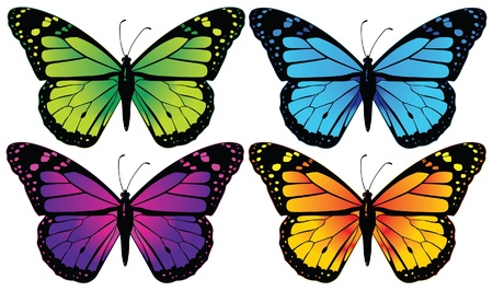 butterfly colorfull vector illustration Stock Vector - 17905178