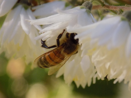 pollinate: Bee pollinate
