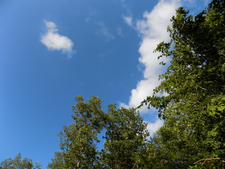 deciduous: Deciduous trees and sky